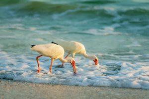 nature and intimate wedding beach